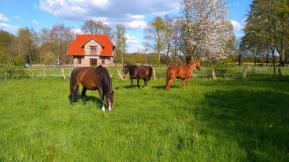 Die Pferde unseres Nachbarn