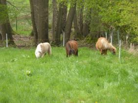 Endlich grünes Gras