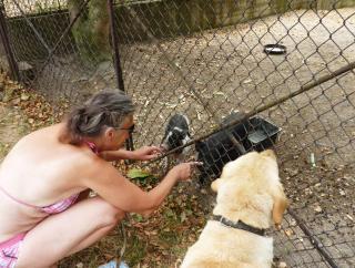 08-16; Serec; Campingplatz; Heidi mit Schweinchen 01