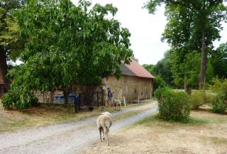 08-16; Serec; Campingplatz; Schafe einfangen