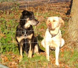11-28; Hunde wohin