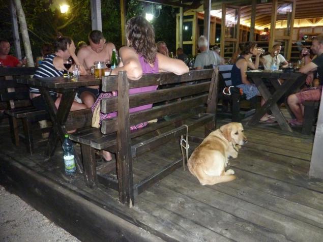 Und der Hund schaut weg