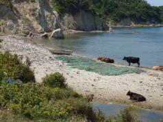 Strand, Kühe und Müll