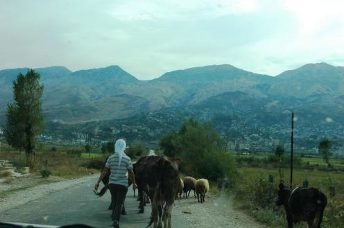 Die Bäuerin mit den Kühen auch
