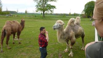 Wieviel Kamele sind hier auf dem Bild?