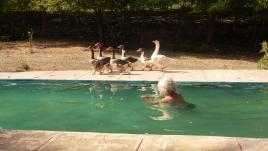Die laufen schneller, als ich Schwimmen kann