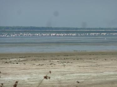 Flamingos auf der Lagune
