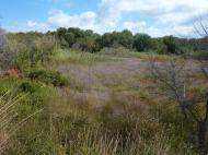 So sieht da Naturschutzgebiet hinter der Düne aus