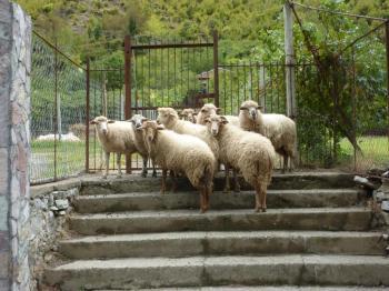 Schafe können nun mal keine Tore aufschließen