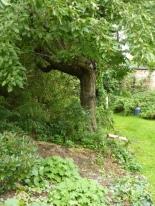 Einfach nur Garten