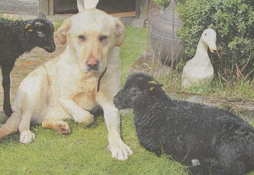 2012-05-03; Die Harke; Hundemama