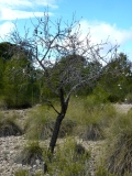 Wilder Mandelbaum