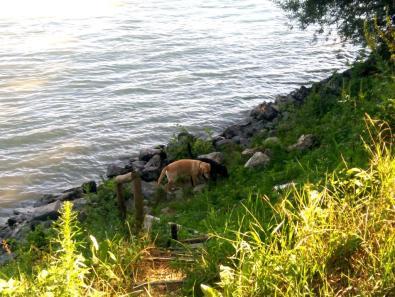 Die Hunde lieben das Wasser