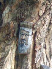 Am Naturdenkmal Pappel