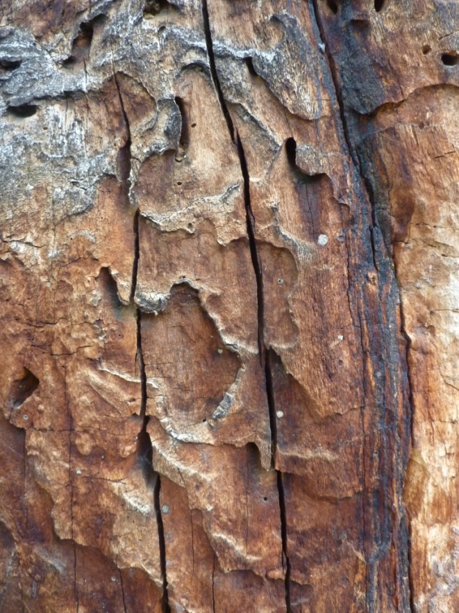 Tote Bäume wie Skulpturen