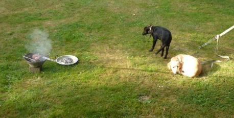 Hunde schleichen um den Grill