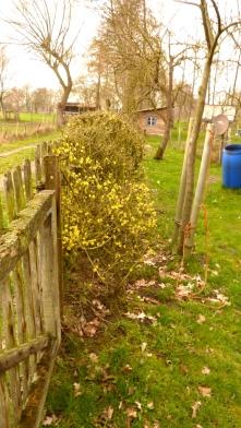 2019-03-21; Hecke Blumengarten