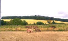 Die Tiere auf dem Hof Fleischfairbrik