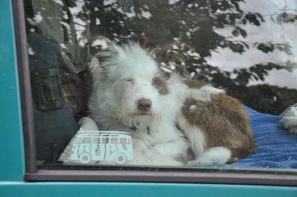 Im warmen Auto