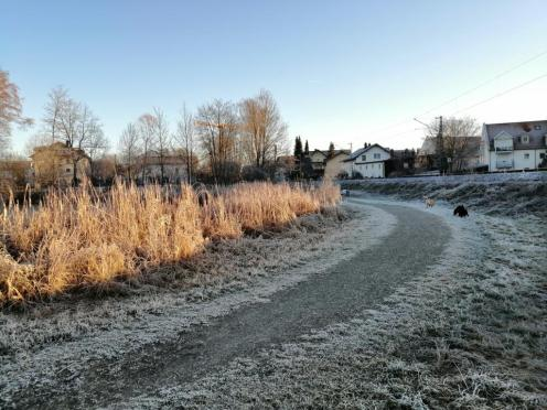 Uns hat der Frost eingeholt