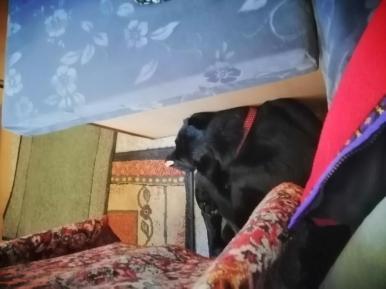 Linda schläft mit einem Stück Speck auf der Nase