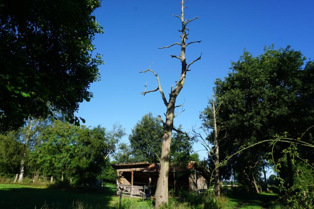 Auch tote Bäume haben Leben!